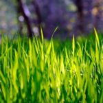 Посевной газон фото
