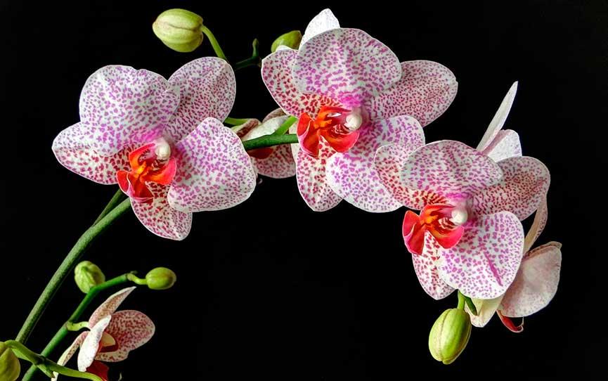 cvetok-orhideya-kartinka