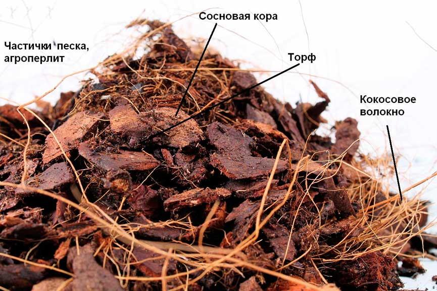 grunt-dlia-orhidei-struktura-kartinka