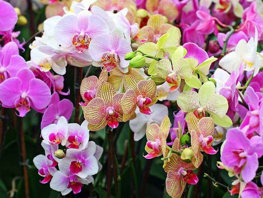 orhidei-v-sadu-kartinka