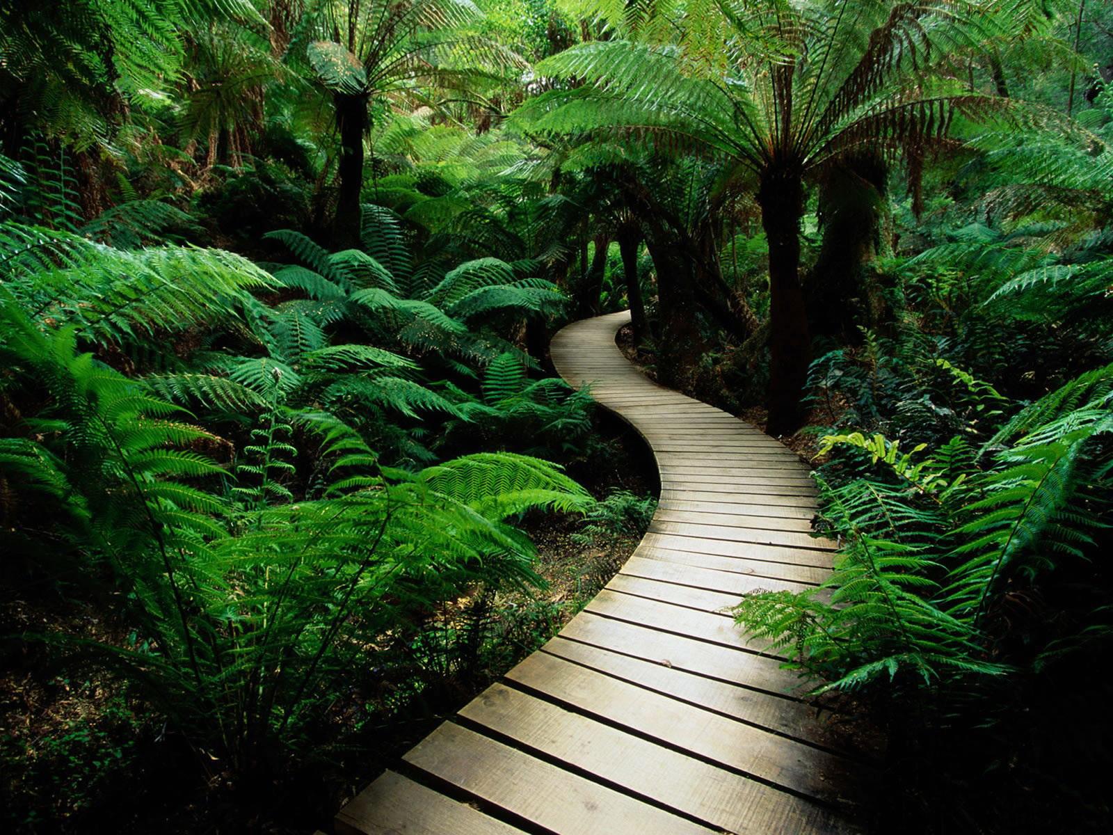 Садовые дорожки из досок своими руками