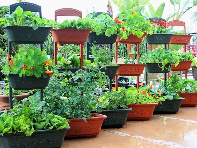 Выращивание овощей в контейнерах фото