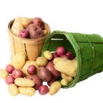 Методы борьбы с картофельной нематодой фото