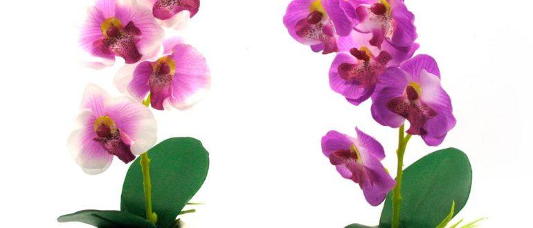 Как ухаживать за орхидей в домашних условиях фото