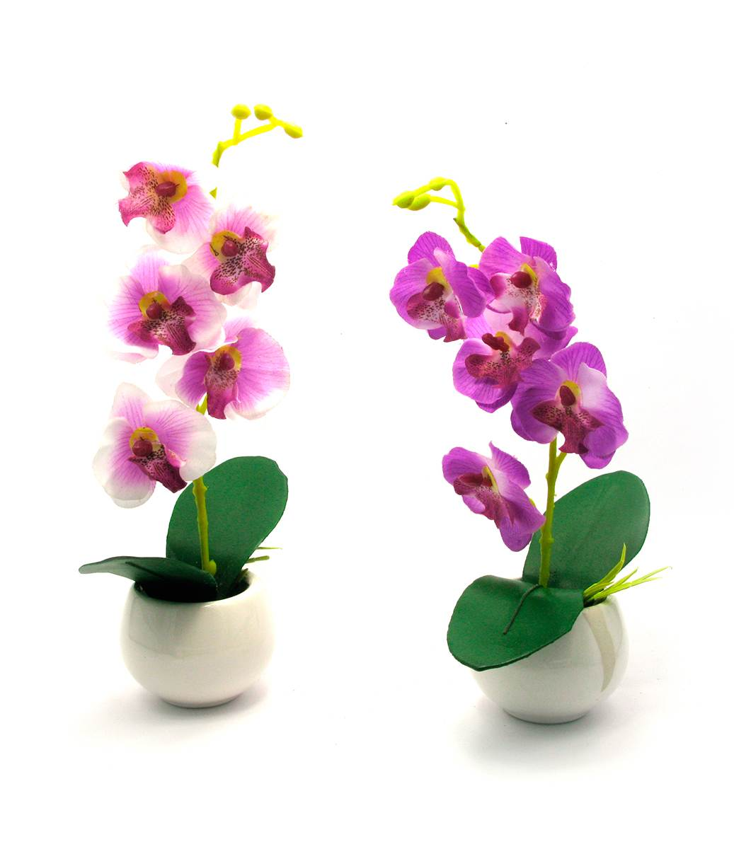 Орхидея и уход за эти цветком