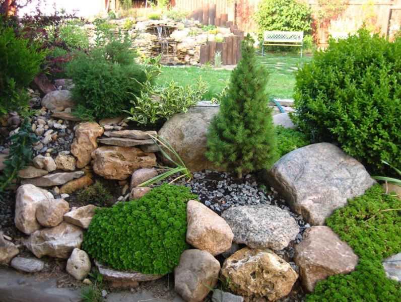 Карликовые растения для сада фото