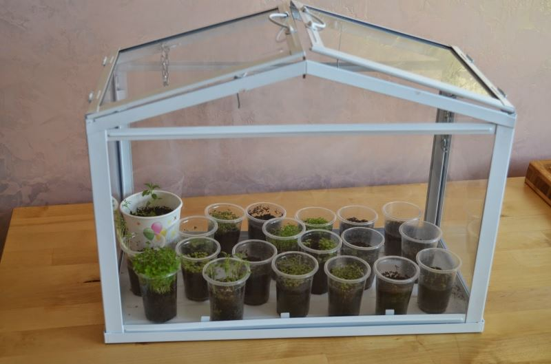 Как сажать растения с мелкими семенами