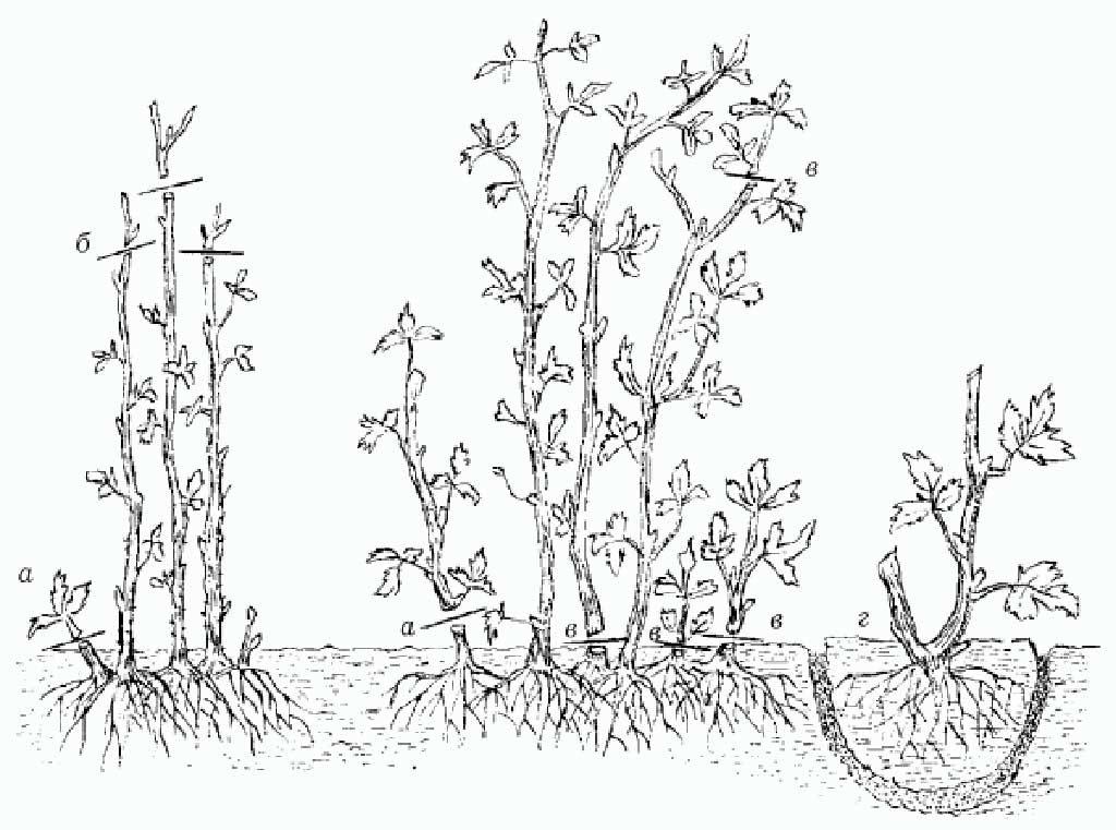 Садовод для начинающих
